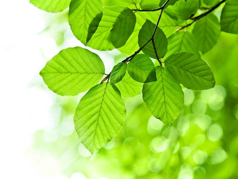 ökologische und physiologische Unbedenklichkeit